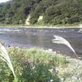 2008.9.22  最上川.清川 萩の花 散る
