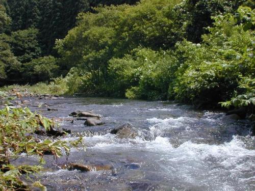ブナの原生林から流れ出た川