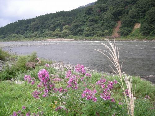 2008.9.7 最上川 清川 「松尾 芭蕉 上陸の地」