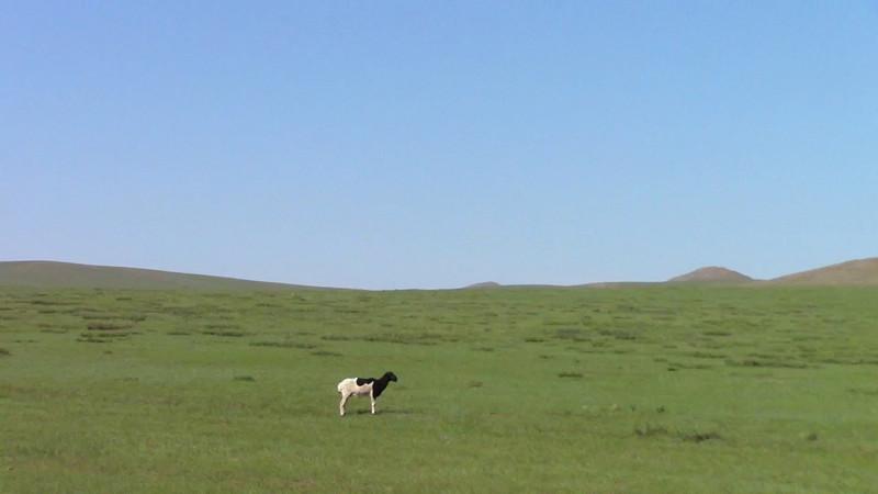 「群れからはぐれた羊」の画像検索結果